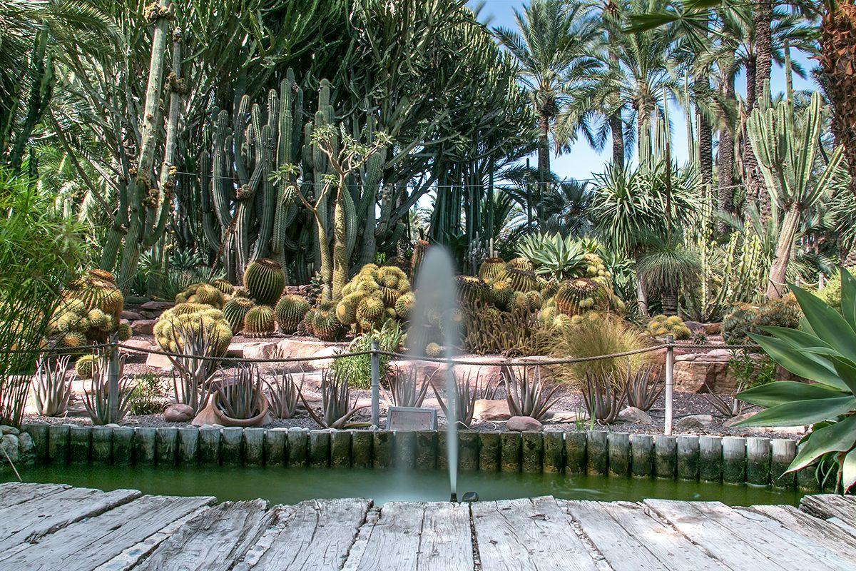 Ogród botaniczny w Elche. Fontanna, kaktusy i palmy.